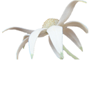 Wyong Writers